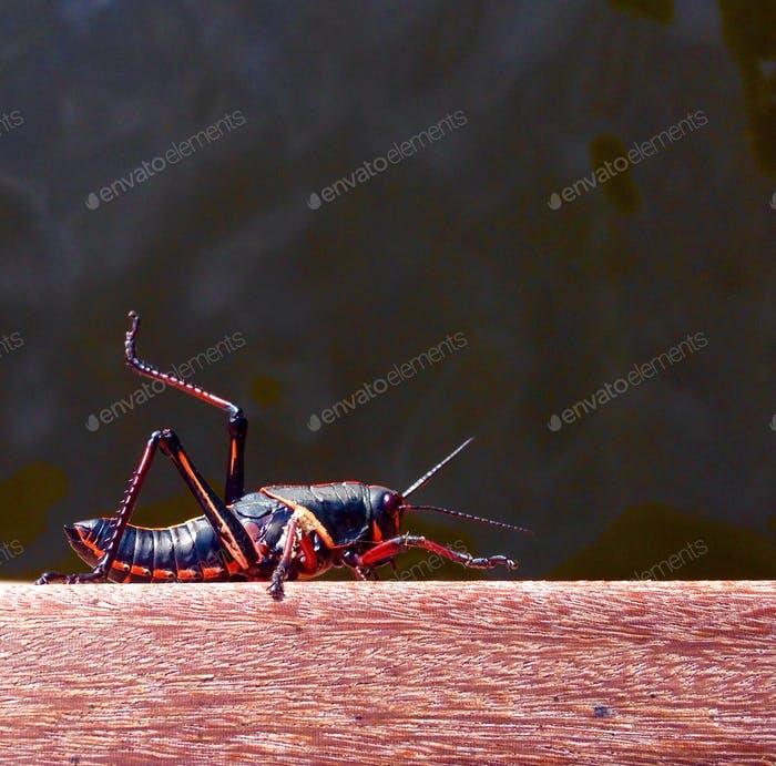 Insekten sind erstaunlich