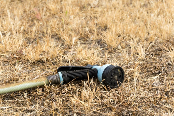 garden hose laying in dry grass; california drought