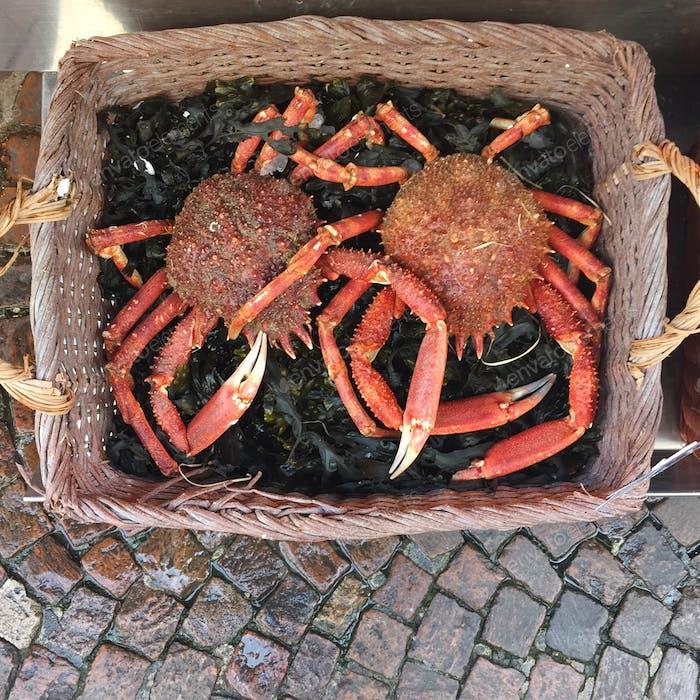Crabs, Paris