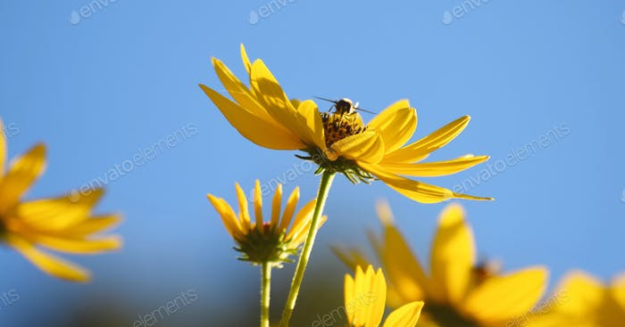 Bee landing on a flower.