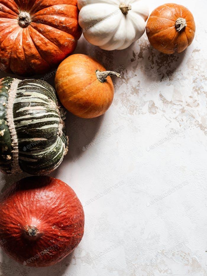 Various pumpkins background