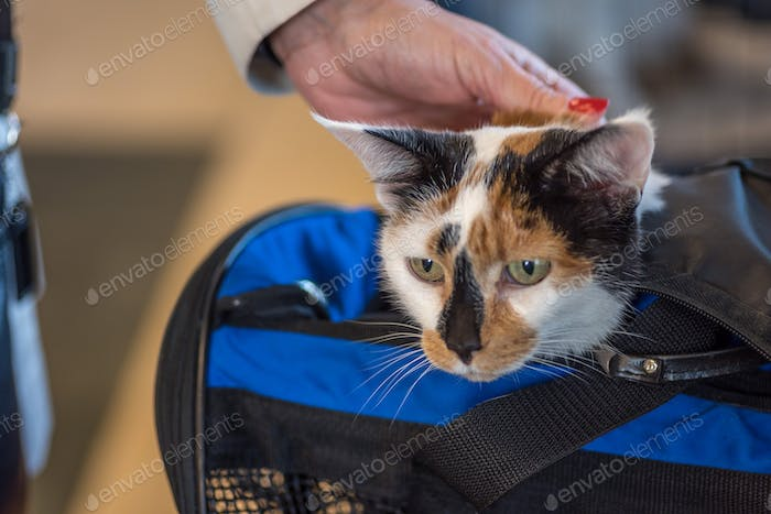 Woman traveling with cat in carrier