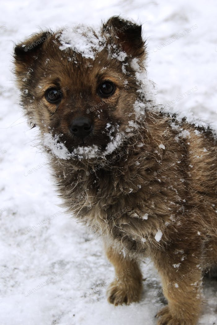 Sad puppy with begging eyes in snow