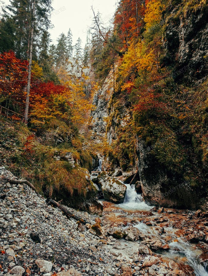 Stream in gorge, autumn, fall, nature, no people, fall colors.
