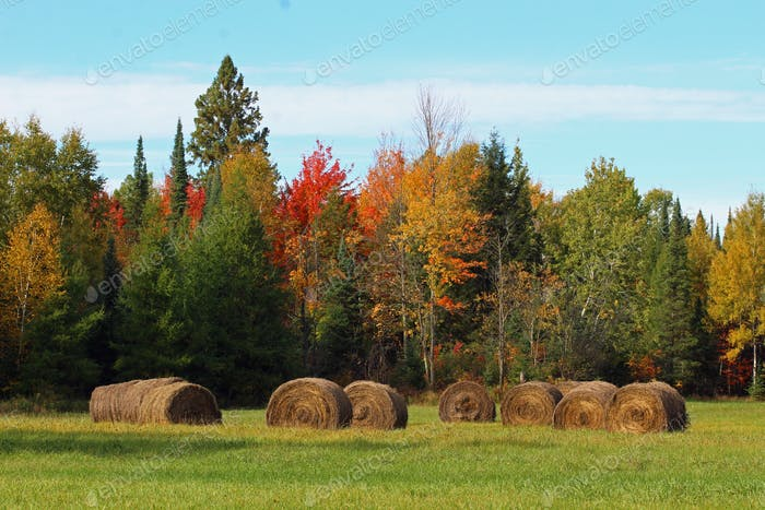 Fall hayfield