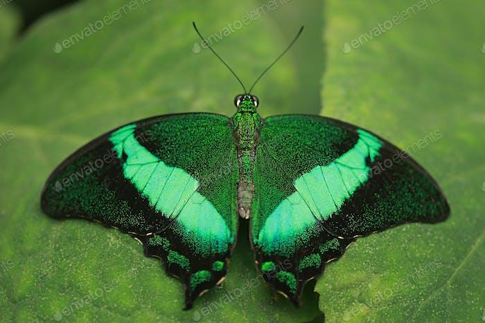 Beautiful emerald