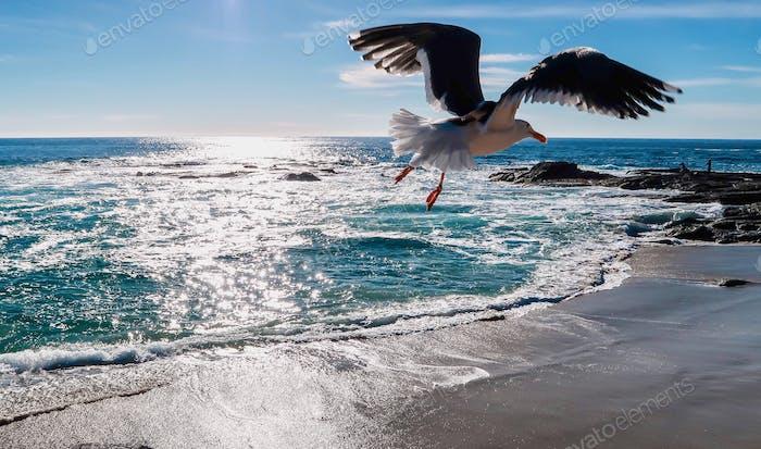 Seagull is flying on the ocean beach