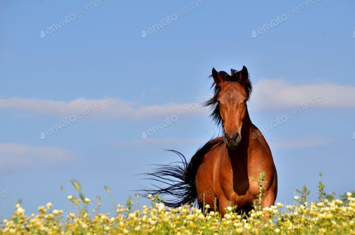An isolated horse