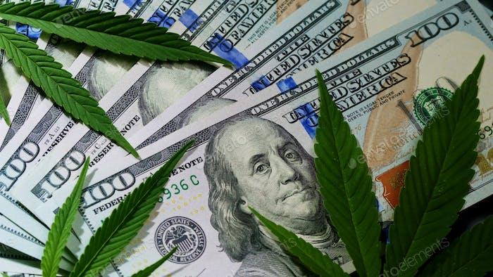 La marihuana de cannabis deja en dólares de dinero bajo las nubes de humo.