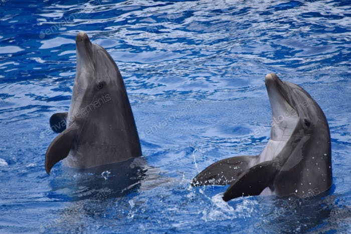 Dolphins clapping at San Diego Seaworld