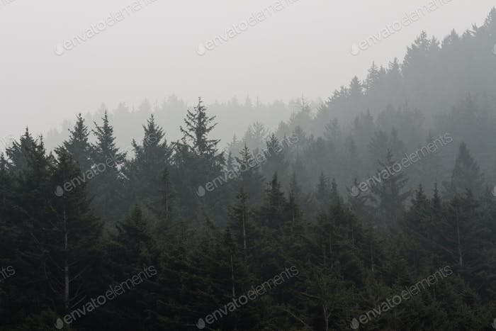 Oregon coastal forest with wildfire smoke and fog