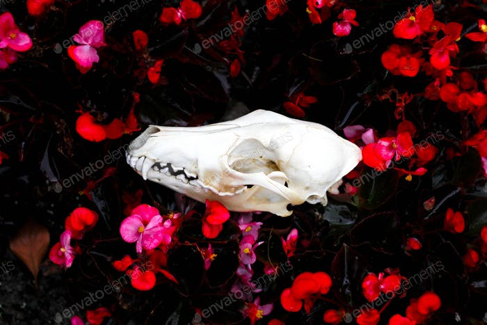 Canine skull in wet flowers