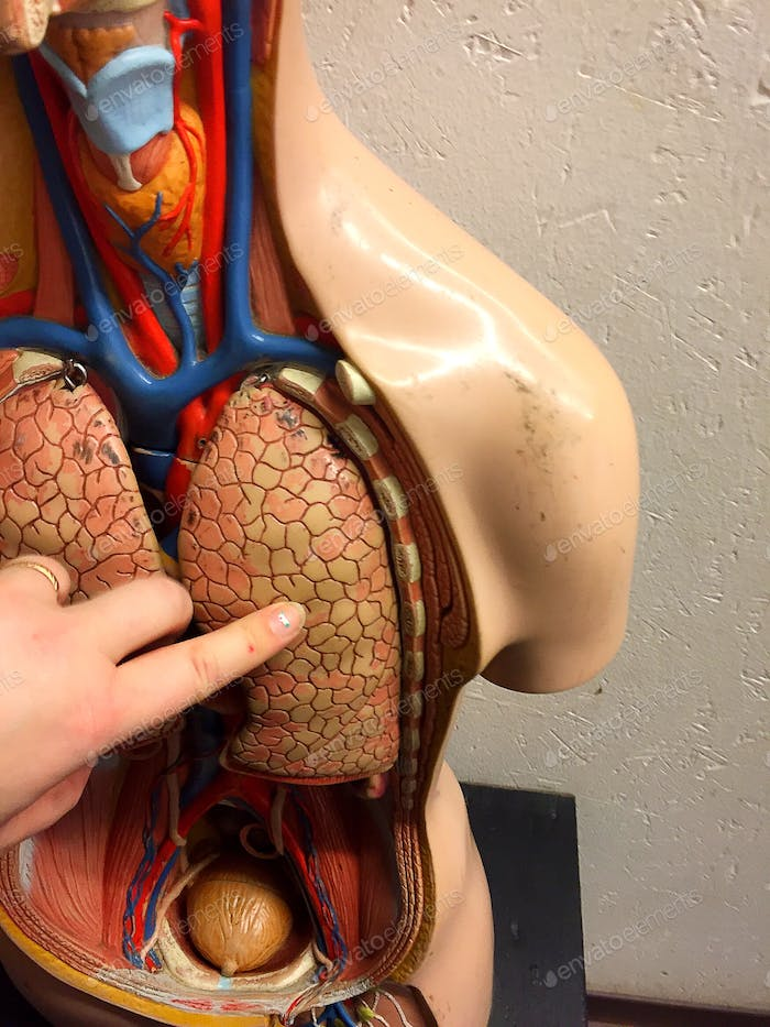Education of the human organs