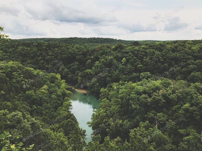 Blick auf Wald und Frühling