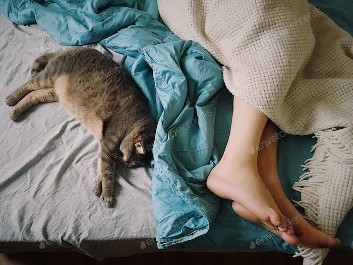 Schläfrige Stimmung. Ein Mann und seine Katze schlafen.