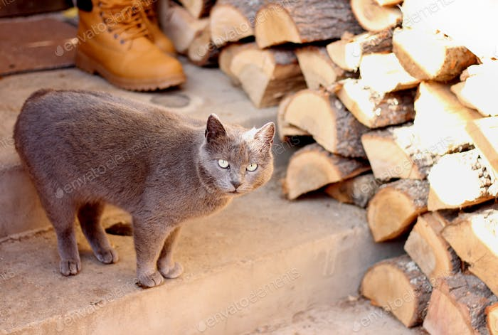 A cat and firewood