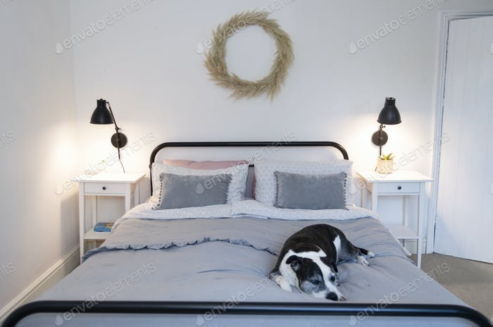 A dog sleeps on a bed in a light and bright bedroom