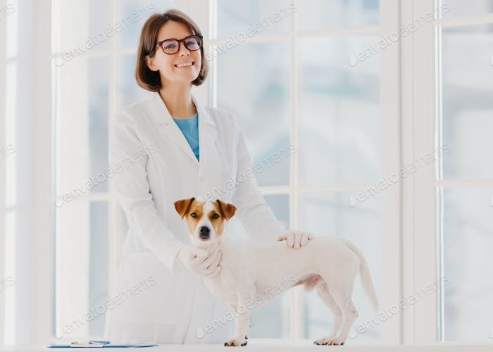 Pedigree dog examined and consulted by veterinarian, pose near examination table  in vet clinic