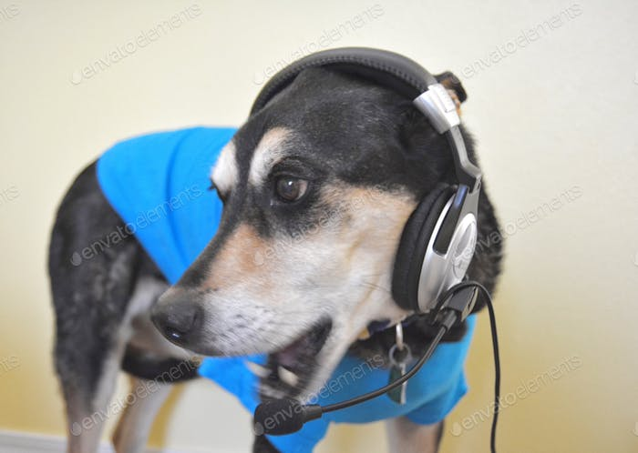 Doggy singer