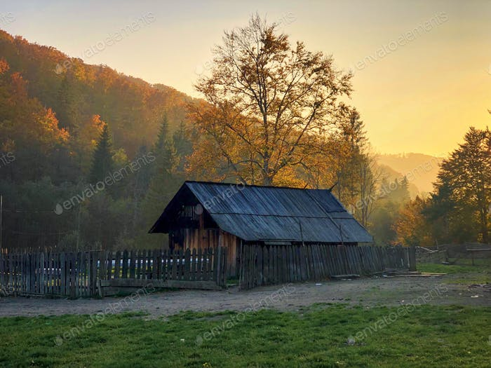 Abandoned wooden chalet surrounded by yellow trees during golden hour