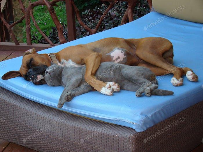 Der Beweis, dass Liebe alle erobert und dass wir alle miteinander auskommen können.