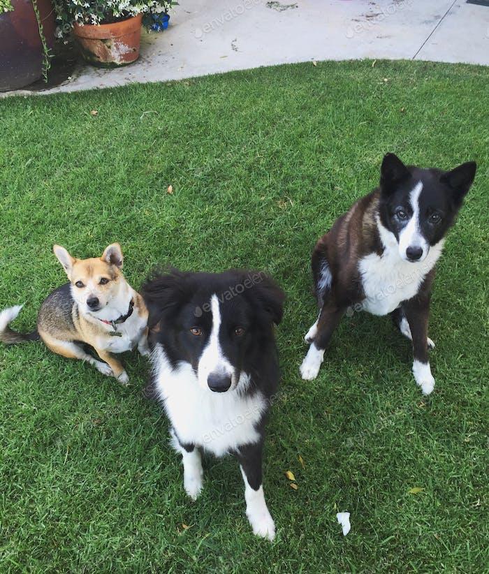 Pups / bffs