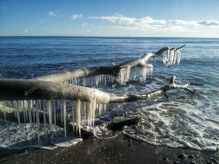 Eisiger Baum im Meer
