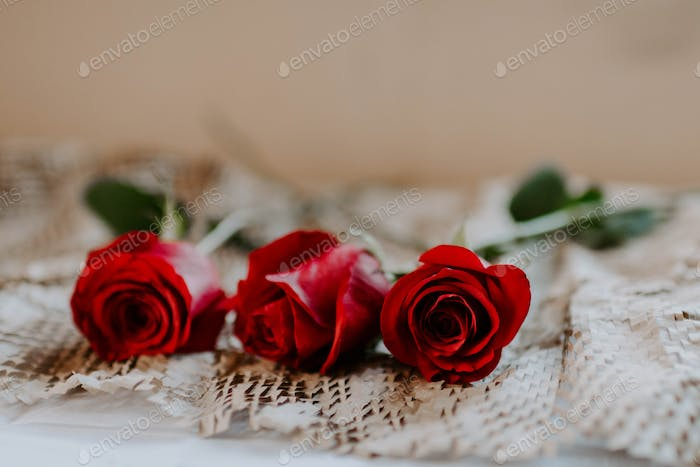 Brilliantly red roses.