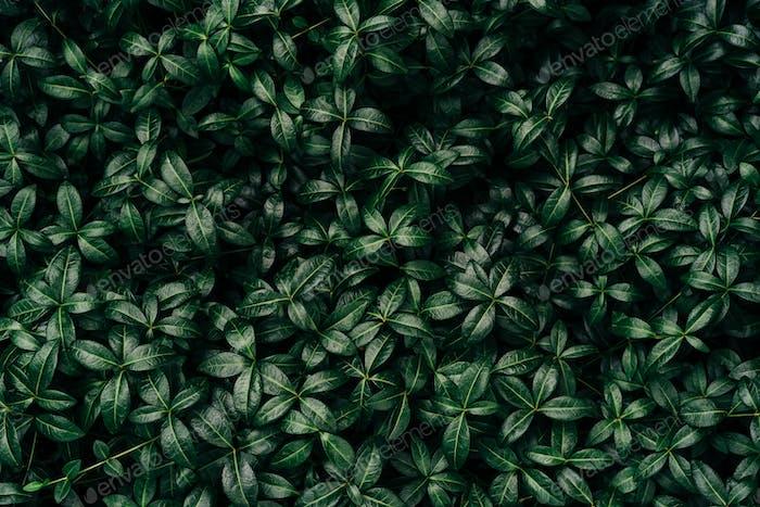 Green grass nature textured background