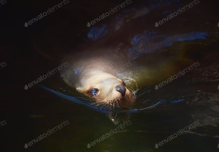 Seal portrait