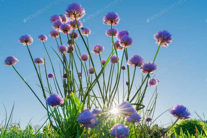 Purple flowers sunny day