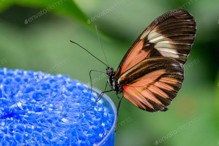 Nahaufnahme eines Schmetterlings, der auf einem Nektar-Futterautomat thront