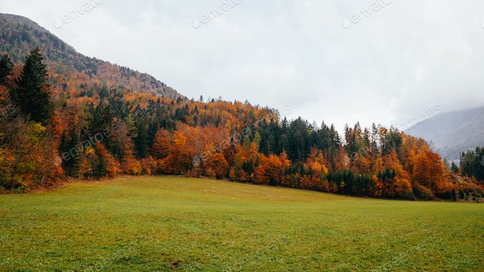 Scenic autumn landscape, mist, trees, fall colors, outdoors, no people.