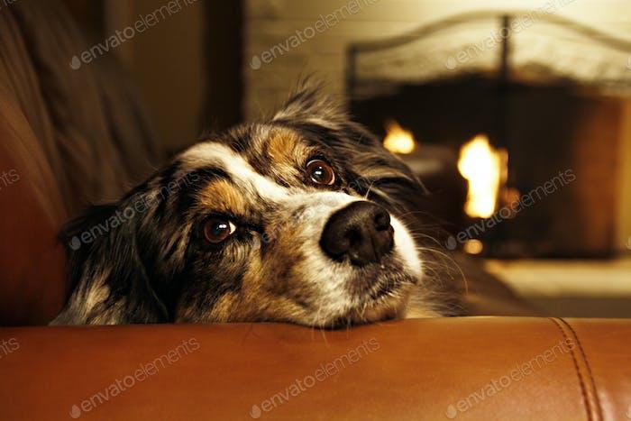 Hund stahl die Couch