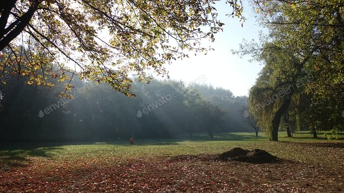 Rays of sun in the park