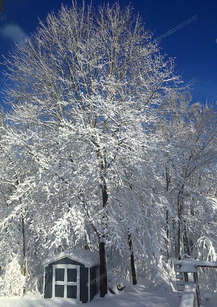 Brilliant white against a deep blue sky