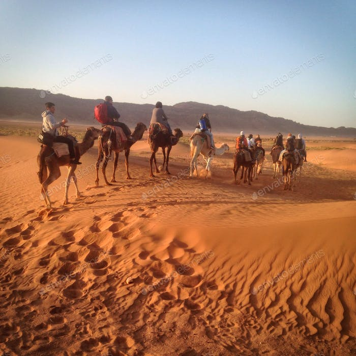 Kameltour in der Westsahara