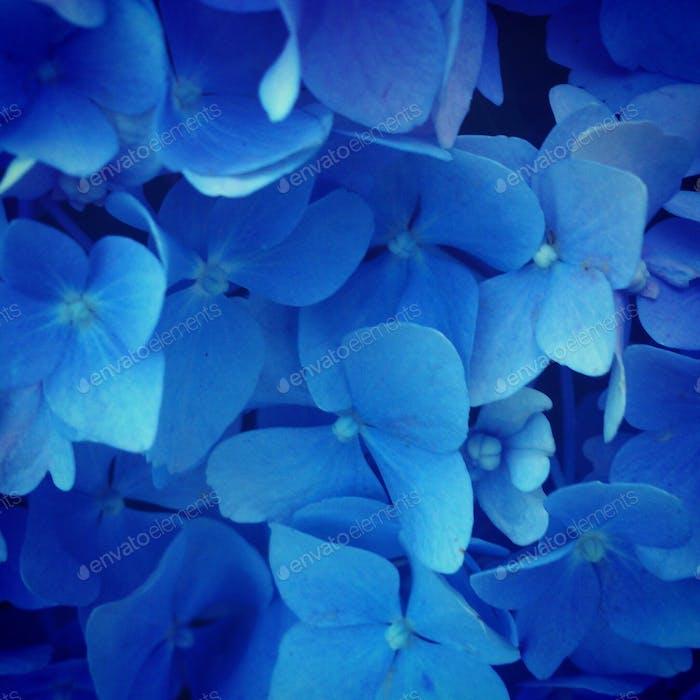 ¡ Azul!