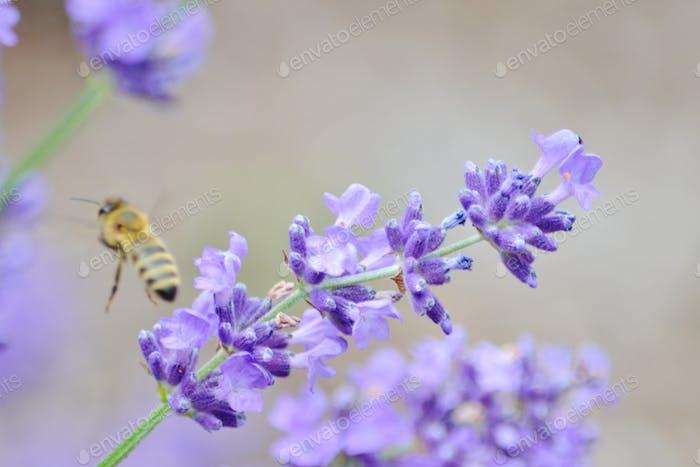 Lavendar #flowersphotography #flowersphoto #flowerstalking #flowerday #flowersday #flowerslove