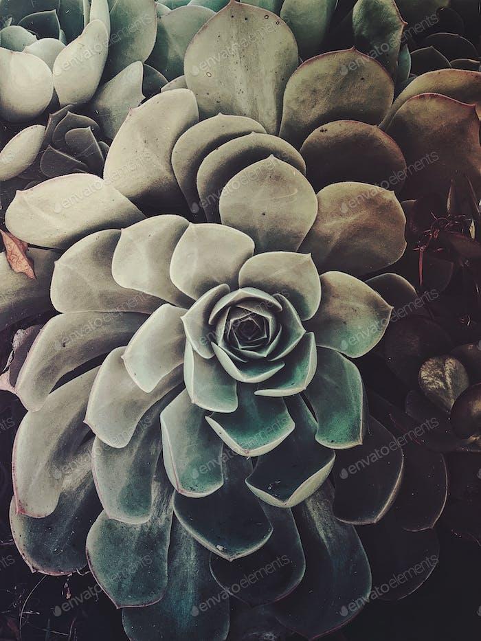 Moody succulent