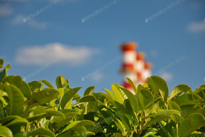 Industrial construction with plant growth against the blue sky