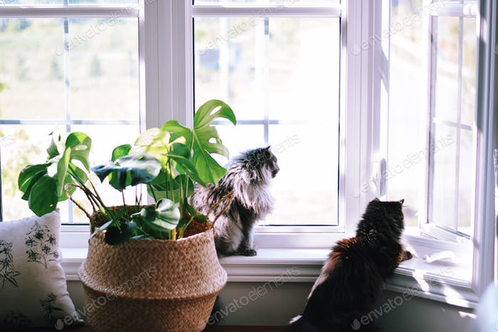 Zwei Katzen sitzen auf einer Fensterbank mit Blick auf Vögel ✨ NOMINIERT ✨