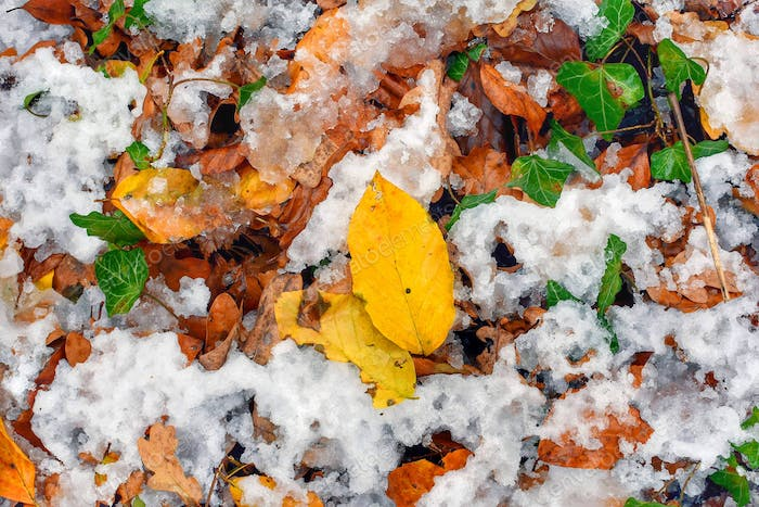 When autumn and winter collaborate the forest benefits