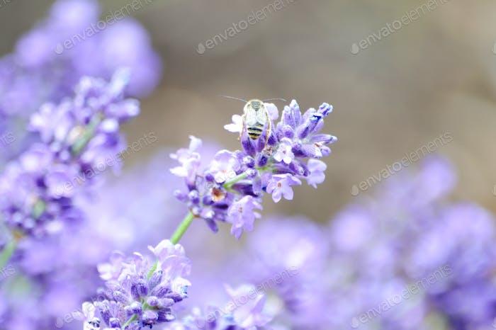 pastel paradise #flowersphotography #flowersphoto #flowerstalking #flowerday #flowersday