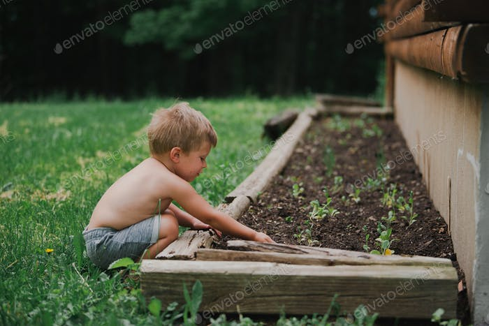 Little boy planting seeds in the garden next to the house - shirtless and barefoot