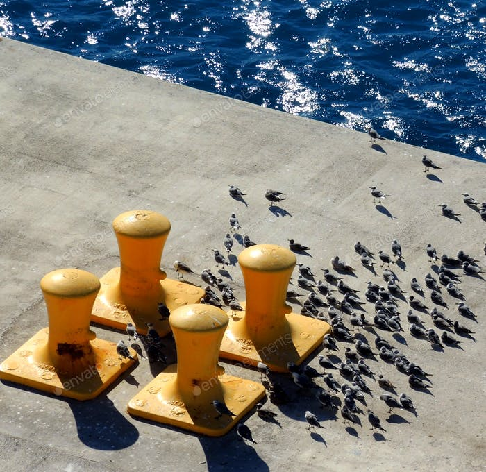 Yellow bollards on a dock to secure ships mooring lines and seagulls facing against the wind