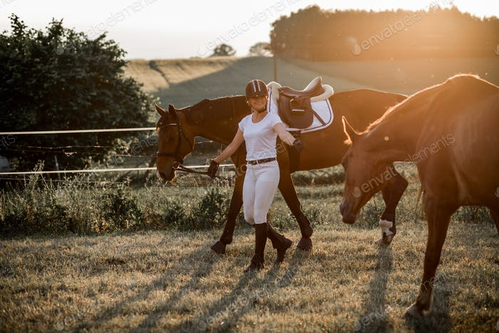 Woman rider walking with her horses in setting sun