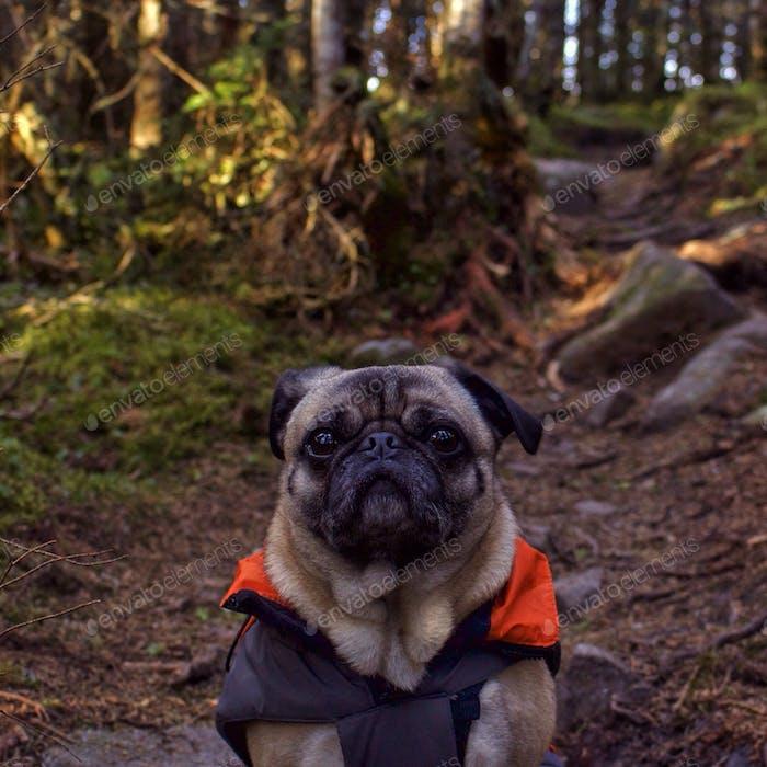 Mein bester Freund, Mack the Adventure Mops