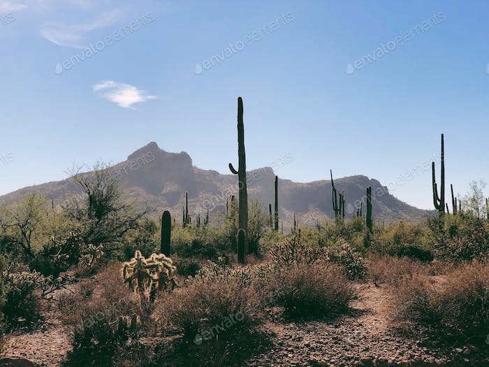 Superstition Mountains at noon.