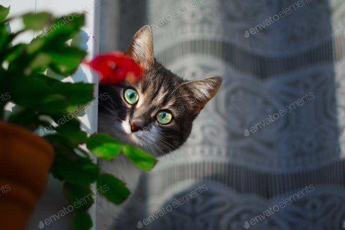 Lindo gato cara retrato mamífero
